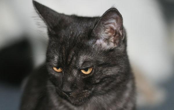 昔から黒猫が前を横切ると良くないと聞いていたので、50メートル程先で横切られそうだったのでその前にと猛ダッシュしたら・・・
