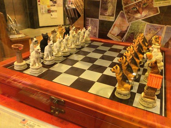 【画像】 猫と犬のチェス&猫と将棋