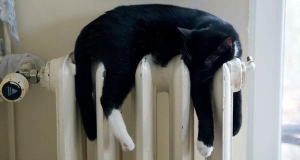外飼いの方、今の時期は黒猫さんはでろ~んとしてますか?