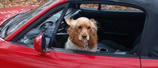 ドライブ好きなわんこ、嫌いなわんこ