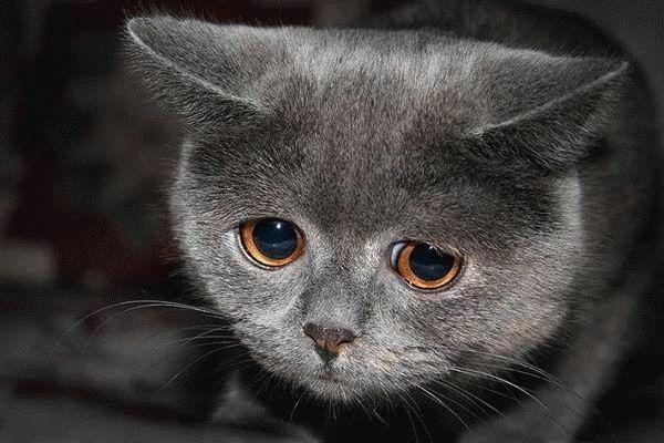 猫「スマソ」