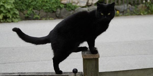 雪が積もりだしてから1Fの駐車場に住み着いた黒猫
