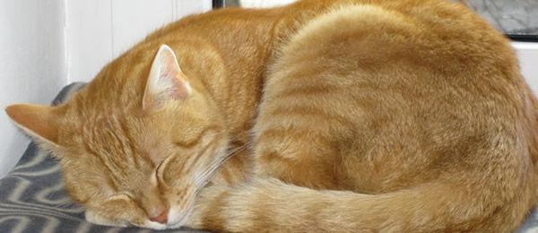 このスレ見て、病気の時にはいつもぬこが枕もとにいたことを思い出した。