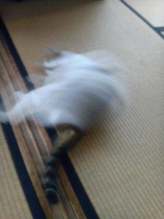 超高速運動猫