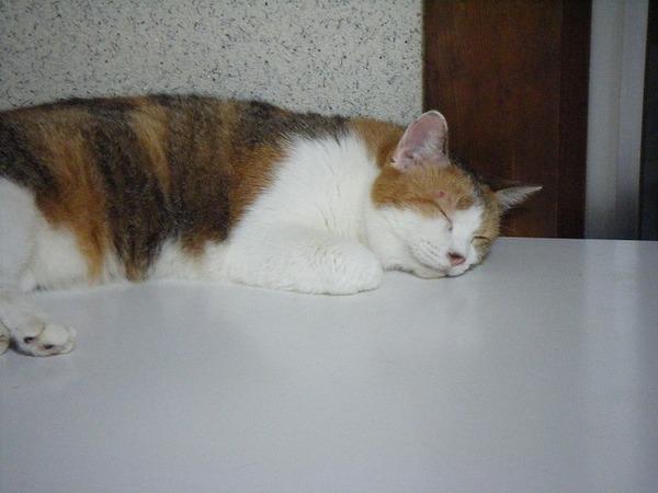 【猫画像】いつもこのスタイルでかわいく寝てるんだけど・・・ 起きたら・・・