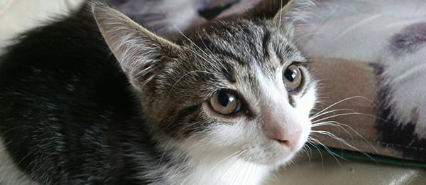 昨日、猫が急に顔をあげ、天井を凝視しはじめた。そばにいた子猫まで顔をあげたため、自分も見てみると…