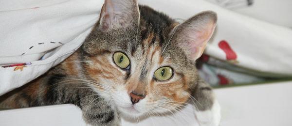 【再掲】 猫が3日くらい行方不明になって帰ってきたことが一度だけある。  しかも・・・ どこに行ってたんだ?