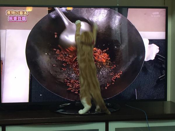 【画像】 料理番組に反応しすぎwww