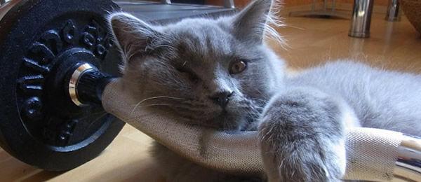 もう7年ほど前のこと  近所のデパート五周年記念祭の懸賞で、(シャレのつもりで)ネコを含む家族全員の名前で応募したところ・・・
