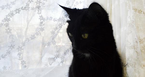 黒猫以外はなんだかふわっとした毛並みだったけど、黒猫の毛並みはしっとりした感じで艶があってぜんぜん違う。毛もあんまり抜けない。 黒猫ってこんななの?
