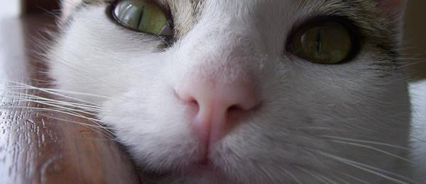 【再掲】 うちの猫が冬眠明けの蛇捕まえてキターーー!!! 怖い!!