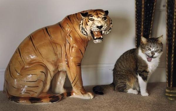 【画像】 猫「まねしてみた」