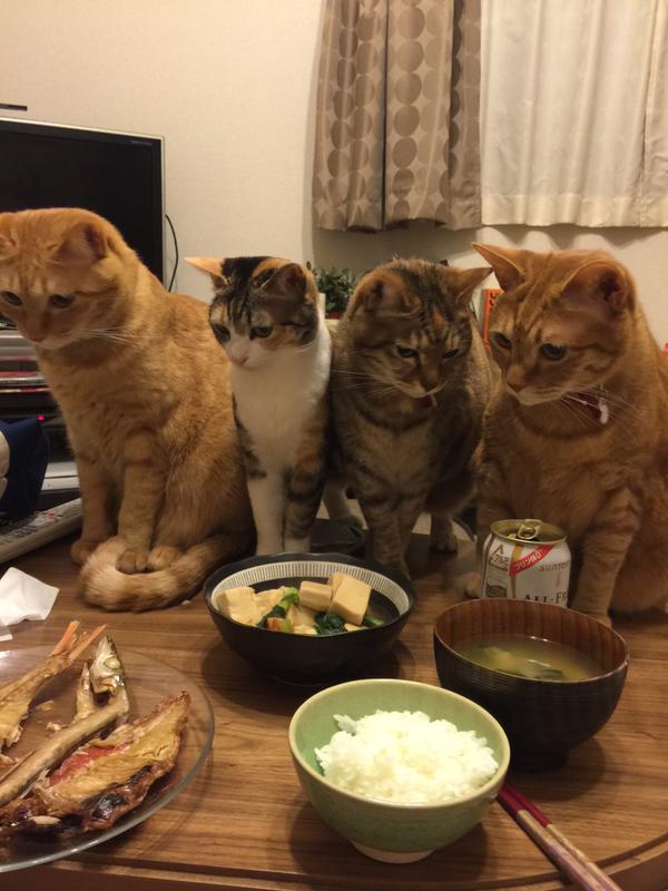 【画像】 テーブルの上。猫たちの視線の先には・・・