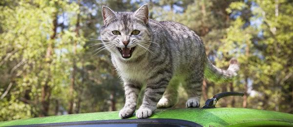 【再掲】 今朝方会社行こうとしたらいつもは無関心な猫が「いややいにゃ~」とか鳴きながらやけにひっついて出るのに時間がかかり、バス一本乗り遅れたんだが・・・