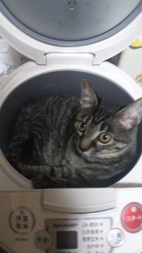 ただ炊飯器の釜を洗っていただけなんだ ・・・