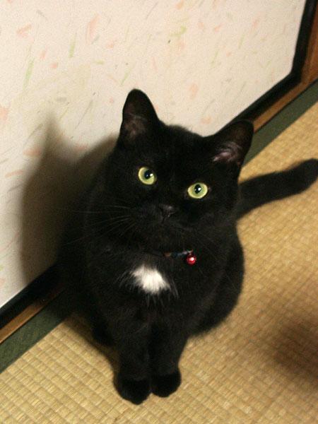 我が家の黒猫タソも見てやってください。