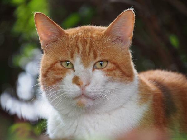 【画像】 なんかすごく猫らしい顔をした猫