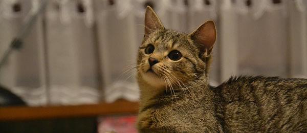 そんなことより聞いてください。昨日夜中にベッドで寝てたんです。そしたら足元でうちの猫が・・・
