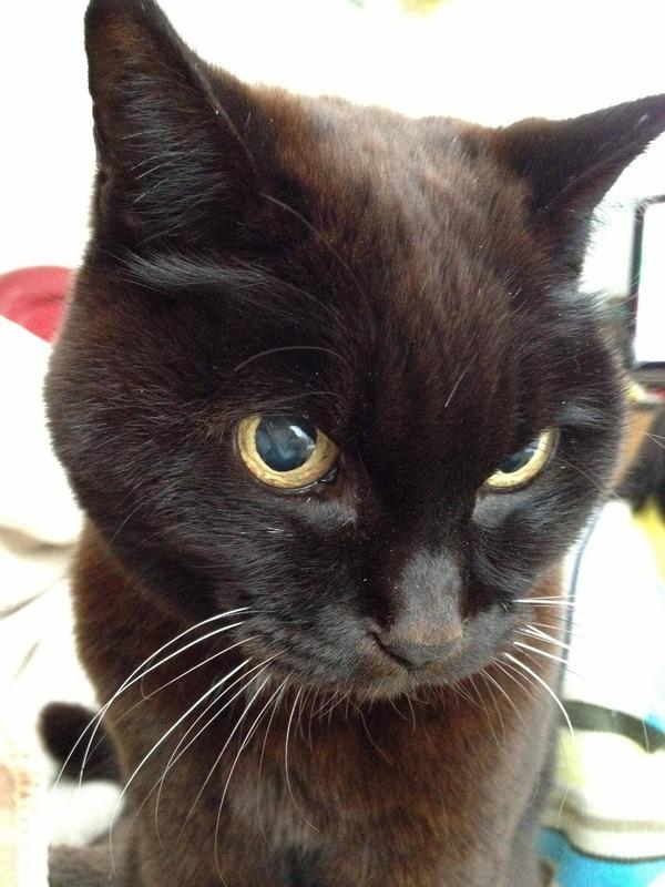 ウチのコは今月19歳になりました。去年あたりから、少しずつ茶色っぽくなってきました。不思議だ。歳のせいかな?