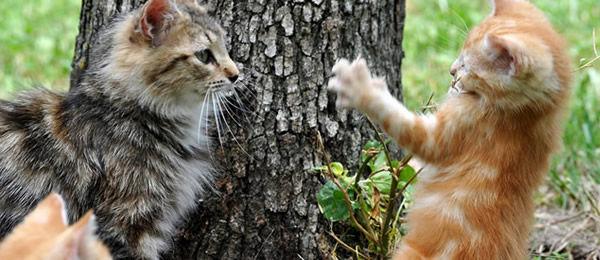 めったに外出しない猫だけど玄関までついて来て外に出してくれと言うので外に出したら駆け足でどっか行ってしまった。なんで集会するんかな? → もしかしたら・・・