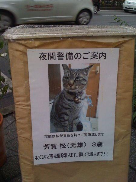 【画像】 新手の里親募集ポスター