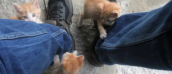好物のかつお節をねだって  にゃーにゃー鳴いて足元にまとわりついてくる猫に向かって・・・