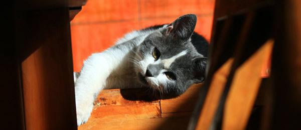 【再掲】 うちの猫がドアノブ回そうとしててびびったんだけど