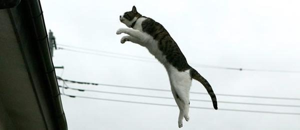 猫_飛ぶ01