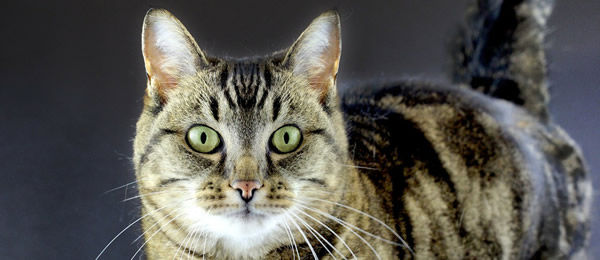 【再掲】 うちの愛猫はペペロンチーノに異常にくいつく。はじめパスタが好きなのか?とおもって