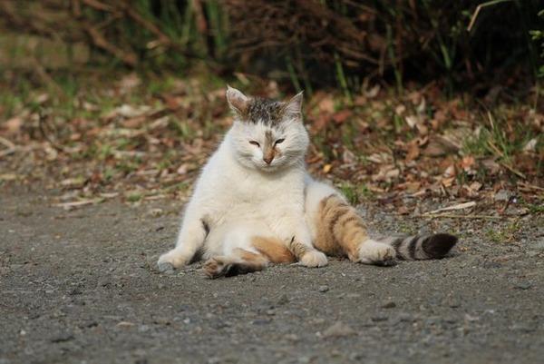 【画像】 おっさんな猫たち(一番最後除く