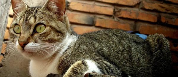 【再掲】 猫は人間の日常会話なら全部理解してますよ。