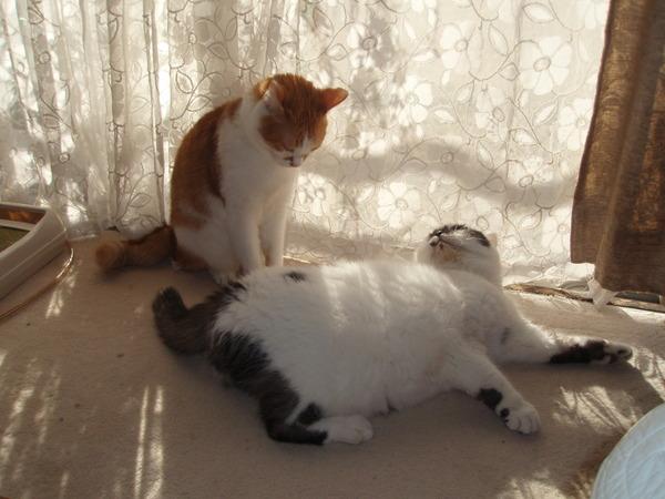 帰省して、実家の猫を激写してみた
