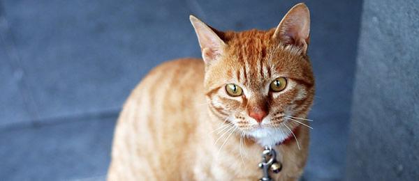 ダンナが出張で猫と2人だけの夜のこと。夜中にふと目が覚めたとき、いつもは絶対に私の傍で寝ている猫がいませんでした。  どうしたのかと猫を探すと・・・