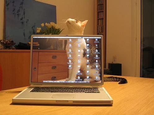 【画像】 猫にとってノートパソコンは・・・