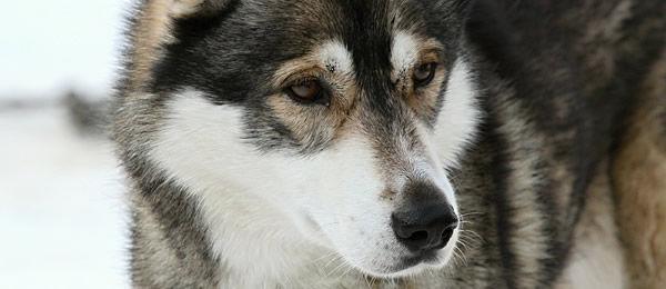 犬って食べ物(特に好物)を前にするとIQが50ぐらい上がるのがオカルト