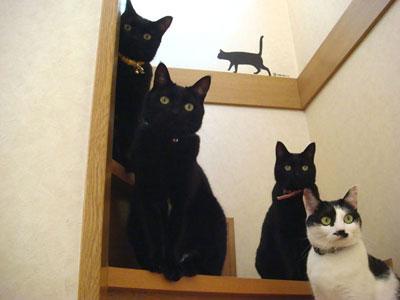 四匹の黒ね・・・こ?