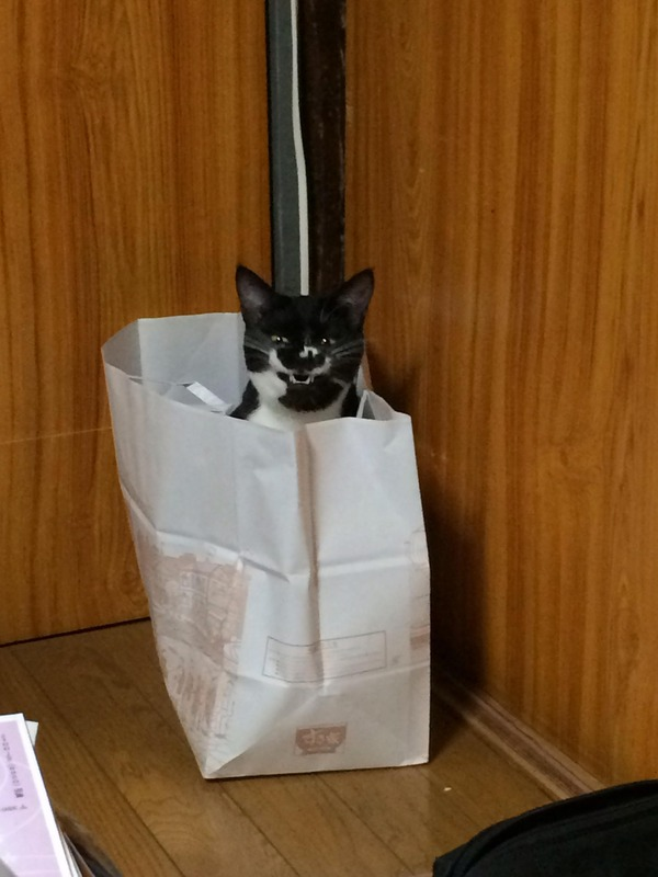 【画像】 すき家の袋から笑う猫