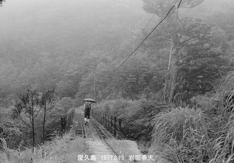 7711832 屋久島森林鉄道
