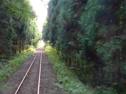 秋田杉の木立