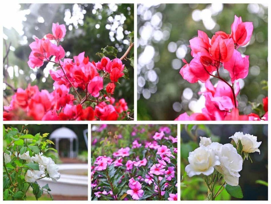 Collage_Fotor2-min