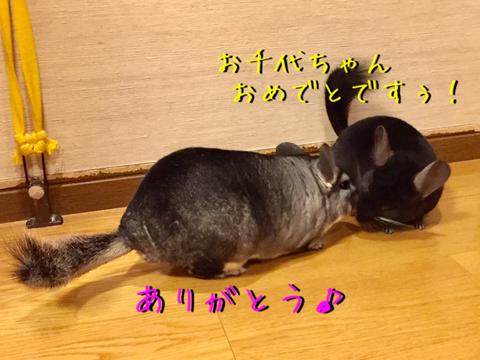 IMG_6019