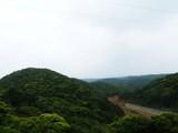 ブロッコリーの森