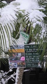 今年はよく降る。たまに降る雪は冬の雨より大歓迎。