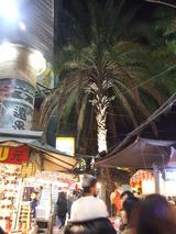 デカイ椰子の木、やはり夏が長い国、台湾。