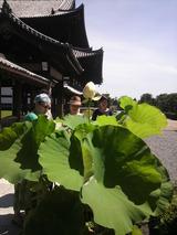 東福寺の蓮