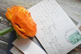 flower-1312794_640