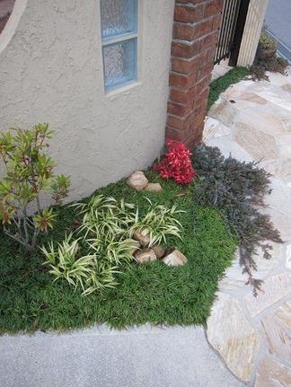 門柱前の植物たち