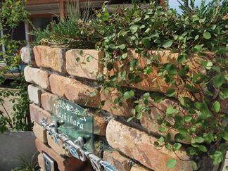 レンガ角柱天端の植物