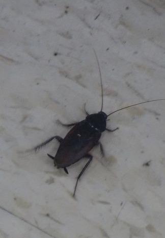 ゴキブリ発見