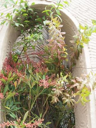 くり抜き穴に植え込んだ植物